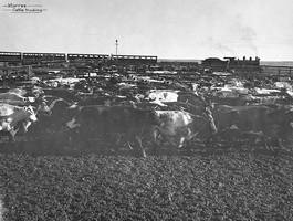 circa 1930 - Central Australia Railway trucking cattle Marree - engine and yard